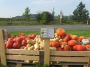 Self Serve Pumpkin Stand