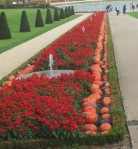 Red flowers, orange gourds, fountains