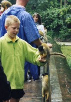 Monkey on boy's arm